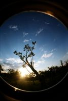 thru my FishEye by ili0207