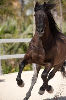 Stock Horse 24 by stock-provider