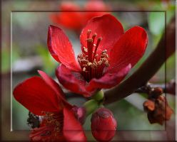 Red Flowers by FrankAndCarySTOCK