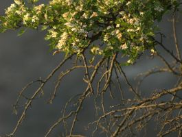 flowers and branches by Enkidulan