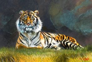 Tiger by tonyhurst