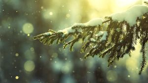 Snow on branch by ecKKKo
