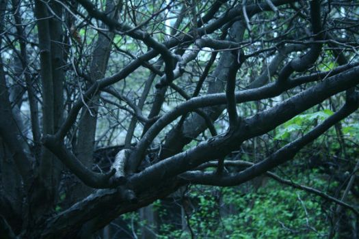 Blue branches by Mon-artefact