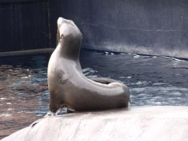 Seal take 2 shot 1-Stock by SilkenWebs