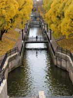 Yellow Autumn 2 by Sulde