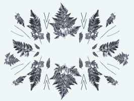 fern pattern black and white by cocorie