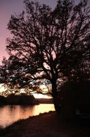 Sunset at Broceliande by Craukette
