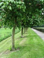 Trees in a Row by 333half-evil-stock