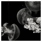 Meeting Of The Jelly Fish by EintoeRn