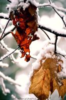 Snowy Leaves by musicismylife2010
