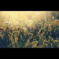 yet another by biq