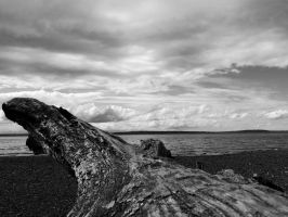 Driftwood : Puget Sound by muzzy500