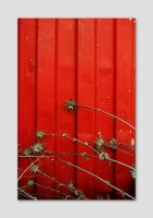 red container and thorns by iram