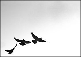 spring is coming-2... by salihguler