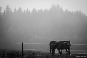 a foggy day by Dodephine