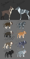 Capo Trial Litter (CLOSED) by WildWithHeart-Kennel