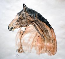 Horse by grini