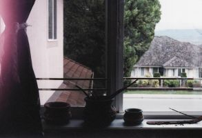 window by bats-tooth