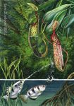 archerfish and pitcher plant by LeenZuydgeest