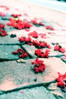 Let the Flowers Fall by TheLovelyDreams