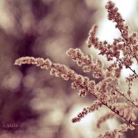 Soft, softer... by Emily-Wendy