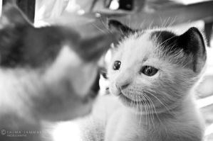 Face To Face by 50500