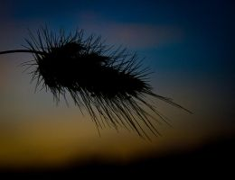 Silhouette Thistle by Zoso1024