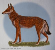 The Ethiopian Wolf by InstantCoyote