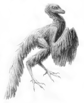 Archaeopteryx cont. by zombie-phoenix
