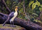 White-Necked (or Bare-Headed) Picathartes by WillemSvdMerwe