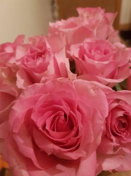 Roses by CharleneExtreme