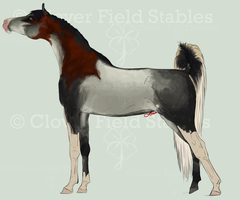 .:CFS Lil Miss Funky:. by EquineInc