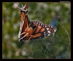 Monarch's Demise by boron