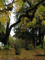 House with Tree in Oregon by SamaraSteele