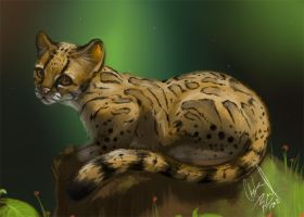 Daily animal - Margay by DanjiIsthmus