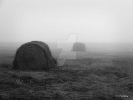 Foggy Field by erbphotography