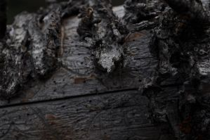 rotting log by Mirage-Photography