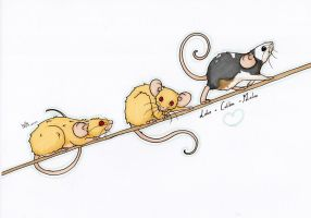 The Wee Free Meece by Kuaishu