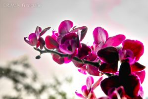 the color purple by TLO-Photography