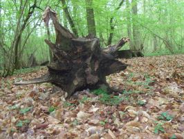 Tree trunk by Mecarion