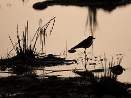 Silhouetted Wader by InayatShah
