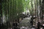 Path through Bamboo Garden by AndySerrano