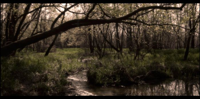 And Through The Woods by AlexanderTheNate