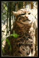 Fishing cats silly photo face by shutterbugmom