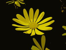 Flower Texture 13 by dknucklesstock