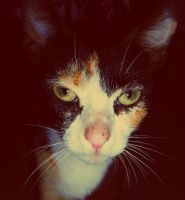 cat the cat by andzcobain
