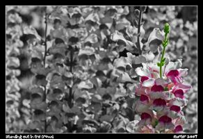 Standing Out in the Crowd by carterr