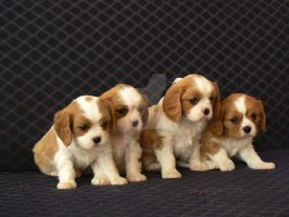 Puppies by Timotep