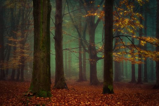 Once upon a Tree by Oer-Wout