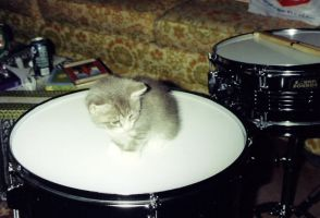 Drummer Kitty by drumgirl